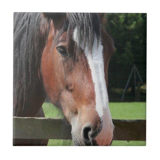Picture of a Quarter Horse Tile or Trivet