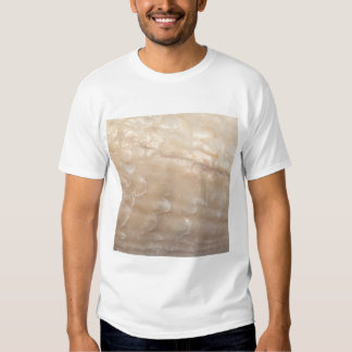 Picture of a shell. t shirt