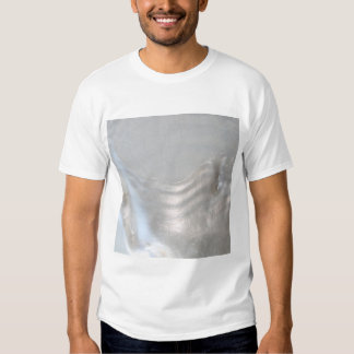 Picture of a Shell. Tee Shirts