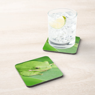 Picture of a Tree Frog Cork Coasters