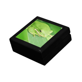 Picture of a Tree Frog Gift Box