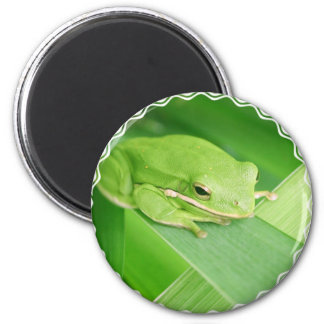 Picture of a Tree Frog Magnet Refrigerator Magnet