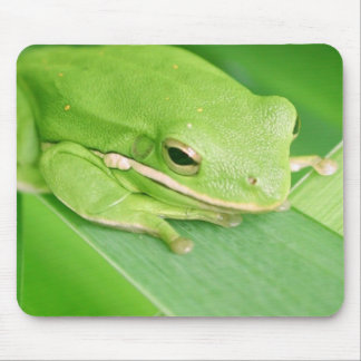 Picture of a Tree Frog Mouse Pad