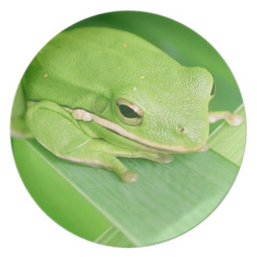 Picture of a Tree Frog Plate