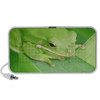 Picture of a Tree Frog Portable Speakers