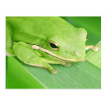 Picture of a Tree Frog Postcard