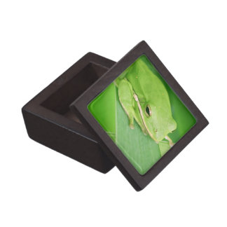 Picture of a Tree Frog Premium Gift Box