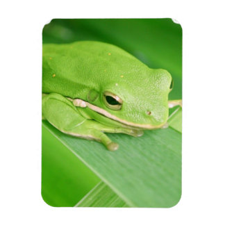 Picture of a Tree Frog Premium Magnet Vinyl Magnets
