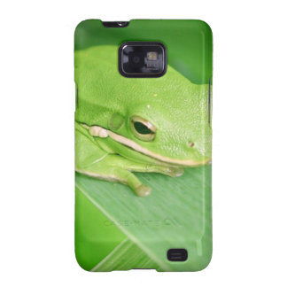 Picture of a Tree Frog Samsung Galaxy Case Galaxy SII Case