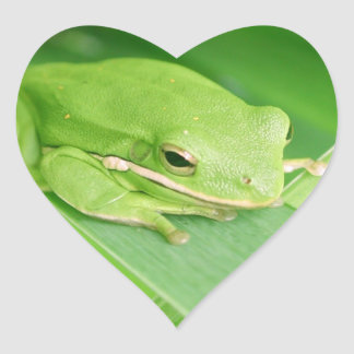 Picture of a Tree Frog Stickers