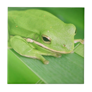 Picture of a Tree Frog Tile