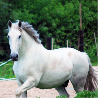 Picture Of A White Horse Running On The Field Cutout