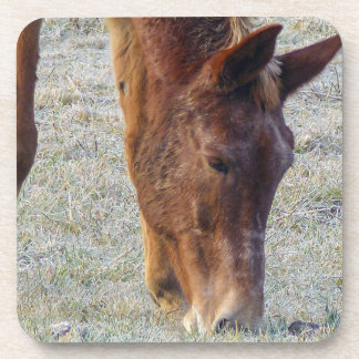 Picture Of A Wild Horse Grazing Drink Coaster