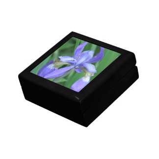 Picture of an Iris  Gift Box