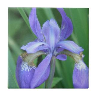 Picture of an Iris  Trivet