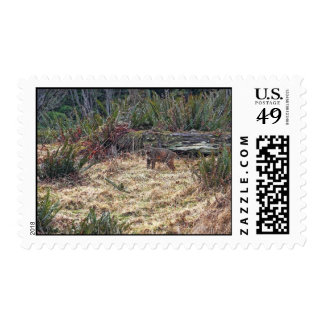 Picture of Bobcat Stamp