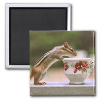 Picture of Chipmunk with China Teacup 2 Inch Square Magnet