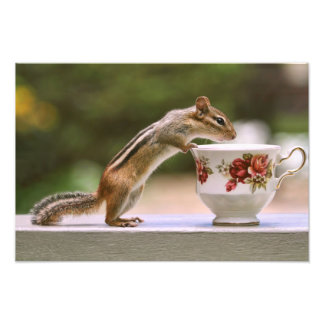 Picture of Chipmunk with China Teacup Art Photo