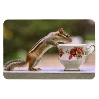 Picture of Chipmunk with China Teacup Rectangular Photo Magnet