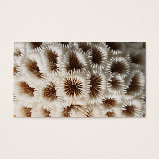 Picture of Coral. Business Card