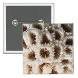 Picture of Coral. Pins