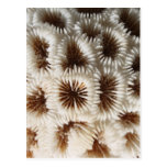 Picture of Coral. Postcard