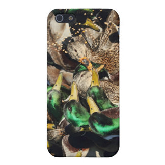 Picture of Ducks in a Crowd iPhone 5 Case