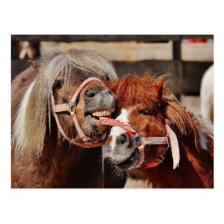 Picture of funny horses postcard