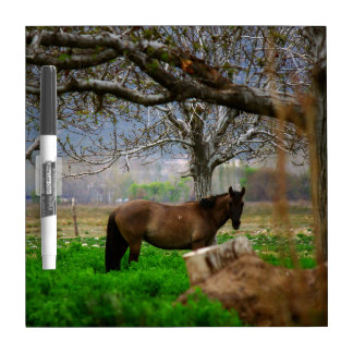Picture of Horses - A Horse Standing On The Field Dry-Erase Board
