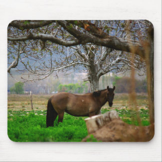 Picture of Horses - A Horse Standing On The Field Mouse Pad