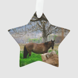 Picture of Horses - A Horse Standing On The Field Ornament