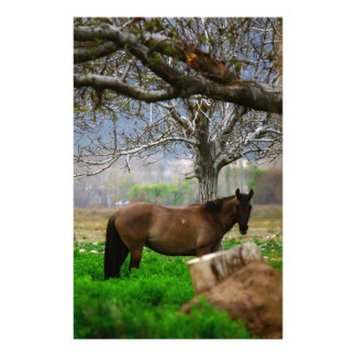 Picture of Horses - A Horse Standing On The Field Stationery Paper