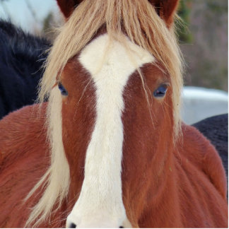 Picture of Horses - A horse with beautiful mane Cutout