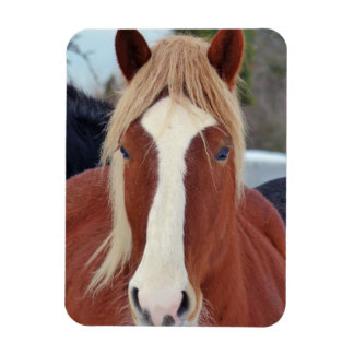 Picture of Horses - A horse with beautiful mane Rectangle Magnet