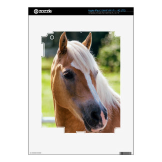 Picture Of Horses - A Horse With Beautiful Mane iPad 3 Decals