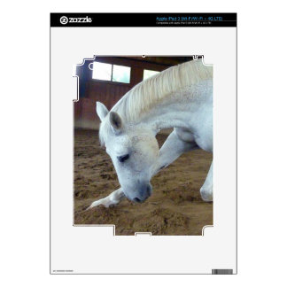 Picture of Horses - A Trained Horse Saluting iPad 3 Decal