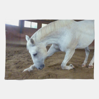 Picture of Horses - A Trained Horse Saluting Towels