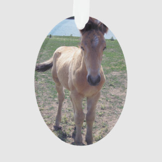 Picture of Horses - A Young Horse Foal Standing Ornament