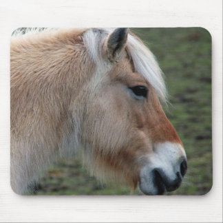 Picture of Horses - A Young Wild Horse Mouse Pad