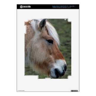 Picture of Horses - A Young Wild Horse Skins For iPad 3