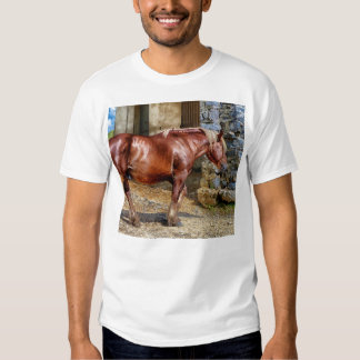 Picture of Horses - Brown Horse Near Old Building Tee Shirts