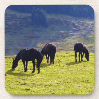 Picture Of Horses Grazing On The Field Coasters