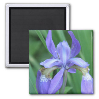 Picture of Iris Square Magnet Refrigerator Magnets