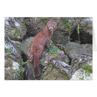 Picture of Mink Greeting Card