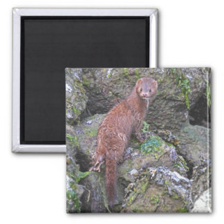 Picture of Mink Magnet