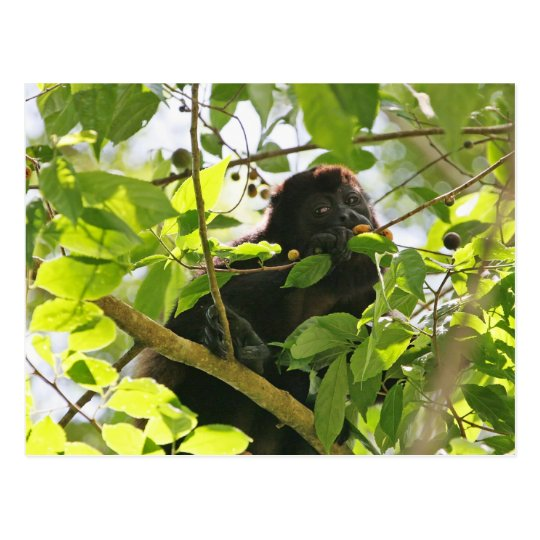 Picture of Monkey Eating Postcard