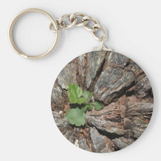 Picture of Old Wood with Plant. Key Chains