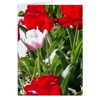 Picture of red Tulips Stationery Note Card
