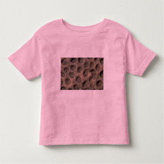 Picture of Sea shells, Trinidad T Shirts