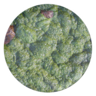 Picture of Slime. Dinner Plate